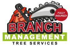 Branch Management