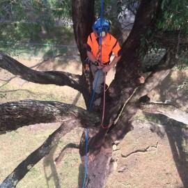 Aerial Arborist Tree Inspections