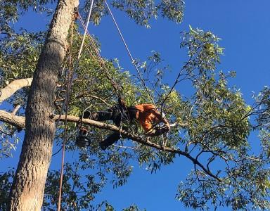 Tree Pruning Newcastle