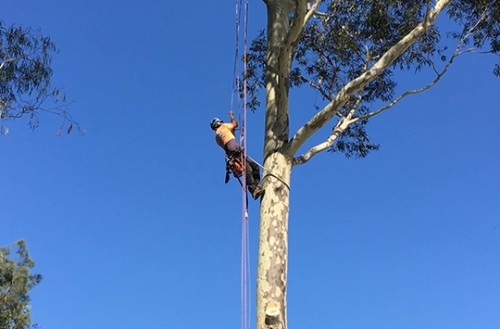 what does an arborist do?