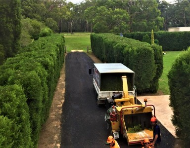 Hedge Trimming Newcastle