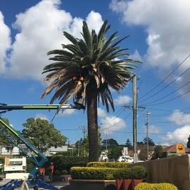 EWP Palm Pruning