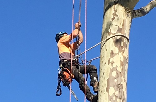 newcastle tree removal services