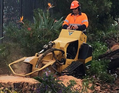 stump grinding newcastle